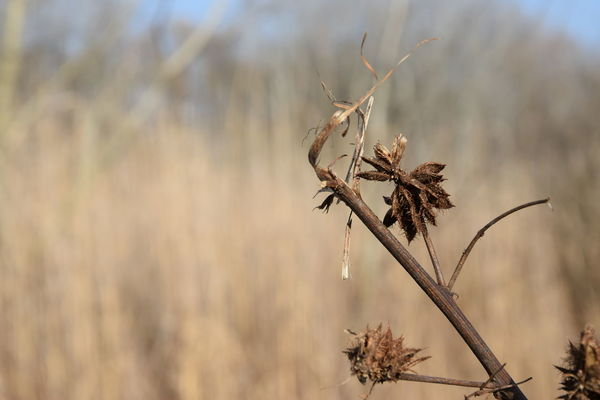 Dried Plant Close Up Macro Photography Focus On Foreground Blury Background Outdoors Beauty In Nature Nature_collection Nature Photography