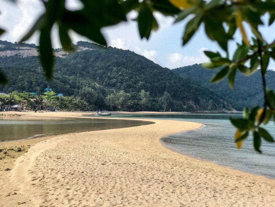 Tree Nature Beach Tranquil Scene Beauty In Nature Scenics Sand Growth Tranquility Day Outdoors Sea Sky No People Water Island Sandbar Ko Phangan Landscape Seascape Outdoor Photography Frame It! Leaves Travel Destinations Tourism