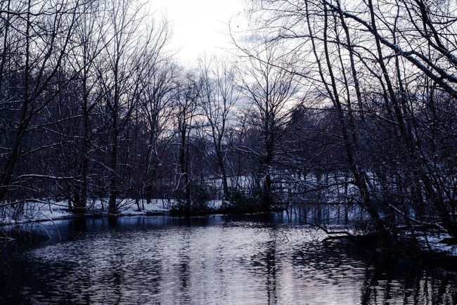 Water Nature Tranquility Tree Tranquil Scene Reflection Outdoors No People Branch Beauty In Nature Winter Snow Brooklyn New York