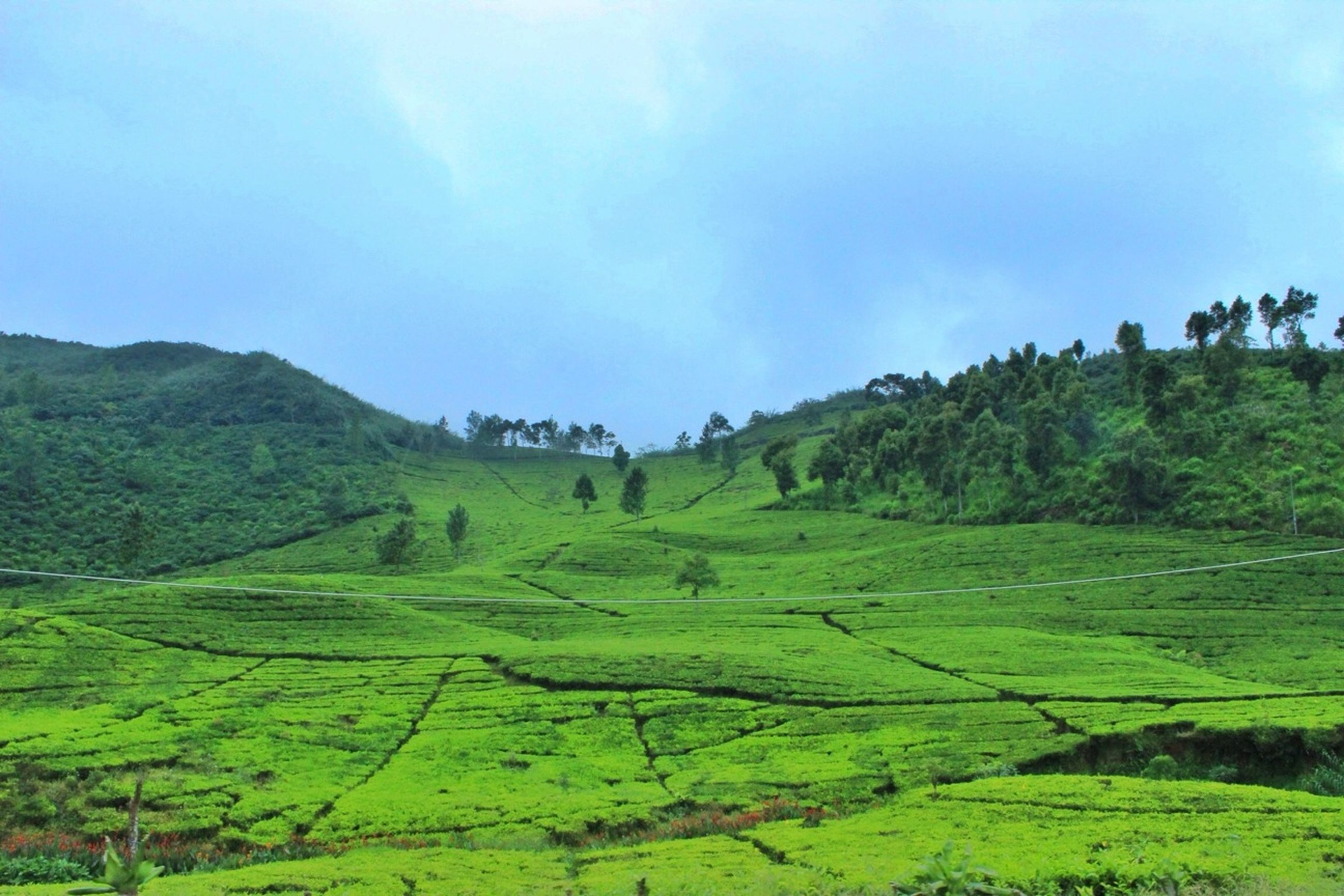 green color, tranquil scene, tranquility, landscape, scenics, beauty in nature, mountain, nature, sky, growth, tree, green, grass, lush foliage, field, non-urban scene, idyllic, day, plant, outdoors