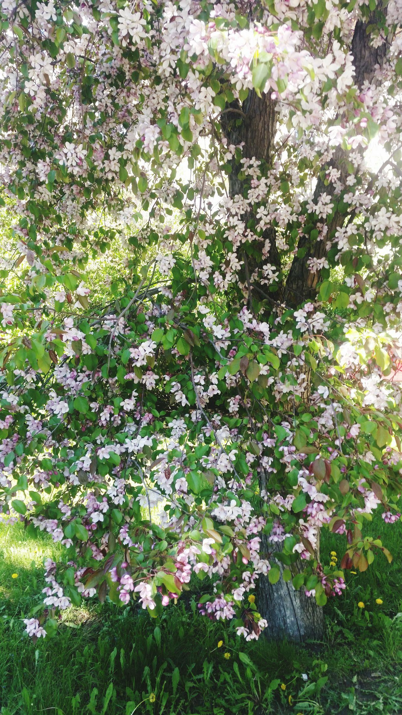 лето запах цветы красиво