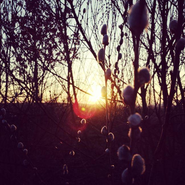 Good Morning Guys.. ? Hello World Nature Whispers Of Spring Eyeem Sunset-sunrise
