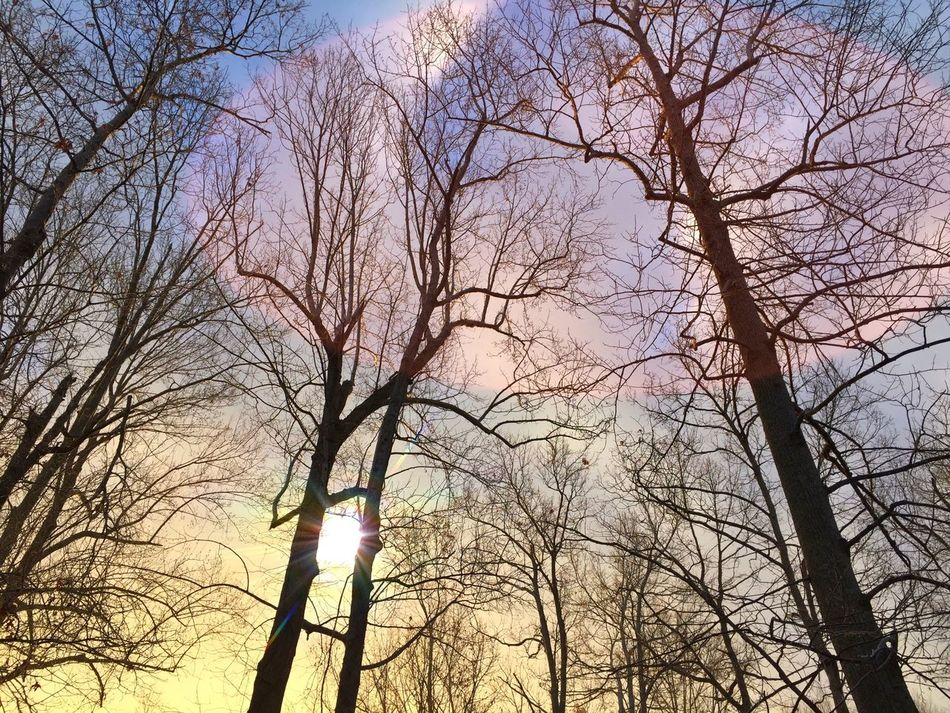 Tree Bare Tree Low Angle View Nature Sky Branch Beauty In Nature Scenics Outdoors Day Sunrise Winter Winter Solstice Tranquility EyeEm Best Shots Lookingup Cloud - Sky