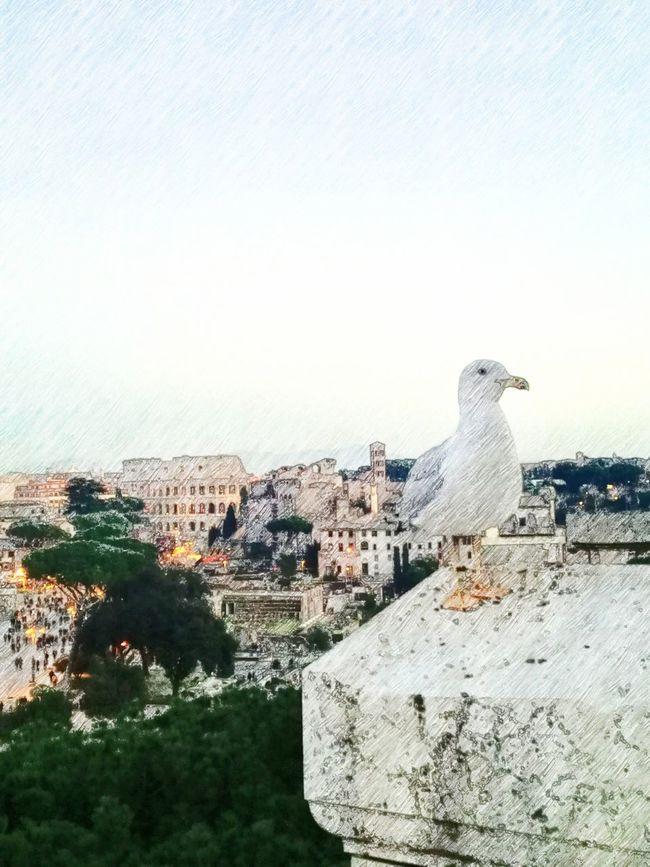 Rome Italy Seagull Colosseum