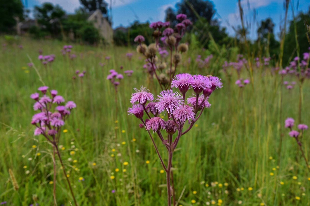 Field Of Flowers Scenics Green Color Nature Landscape Growth Rural Scene Urban Landscape Beauty In Nature Field No People Outdoors South Africa Country Living Grass Pink Flowers Field Low Angle View Landscape
