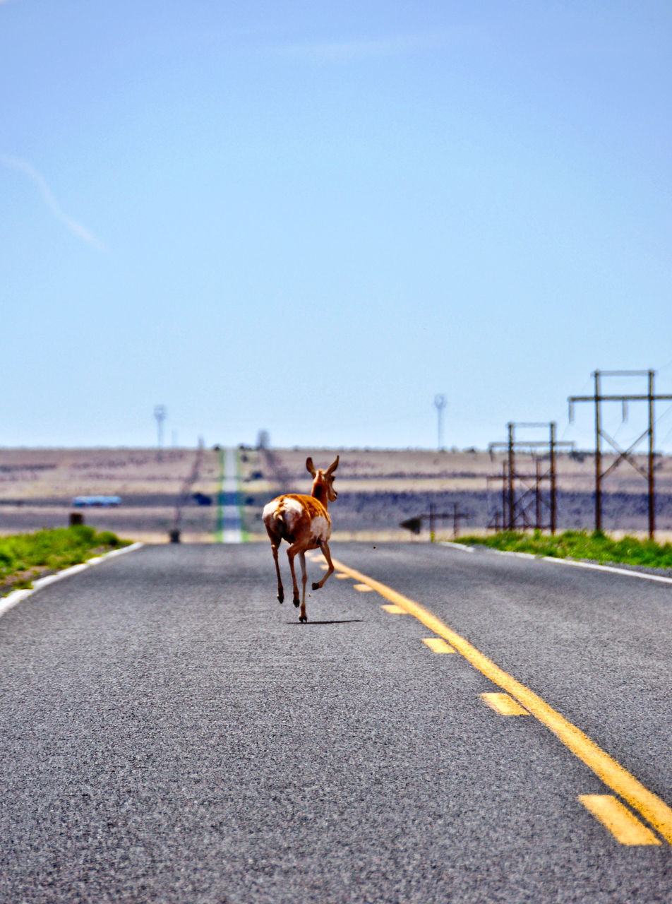 animal themes, domestic animals, horse, road, one animal, mammal, day, outdoors, blue, clear sky, no people, sky, nature