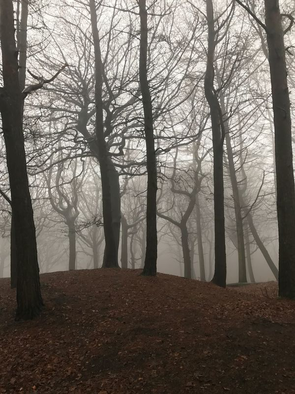 Tree Fog Nature Forest Tranquility Landscape Beauty In Nature Tree Trunk Hazy  Mist Branch Scenics Tranquil Scene No People Day Outdoors Perspectives On Nature