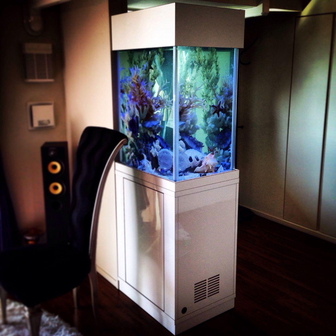 Aquarium Aquarium Powerstone Ocean