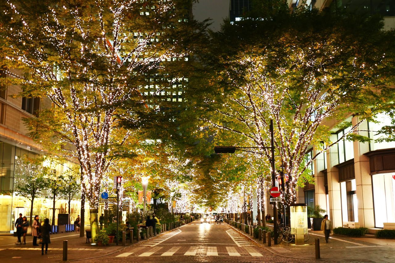 2015  Building Exterior Celebration Christmas Christmas Tree City Cityscape Illuminated Japan Light Marunouchi Night Nightview Road Street Tokyo Tree イルミネーション 丸の内