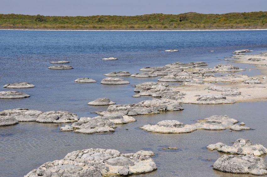 Rare stromatolites in Lake Thetis landscape in Western Australia. Australia Circular Fossil Geology Grey Lake Lake Thetis Landscape Layered Living Marine Natural Phenomenon Nature Outdoors Rare Saline Scenics Sediment Shallow Sky Stromatolites Unique Unusual Water Western Australia