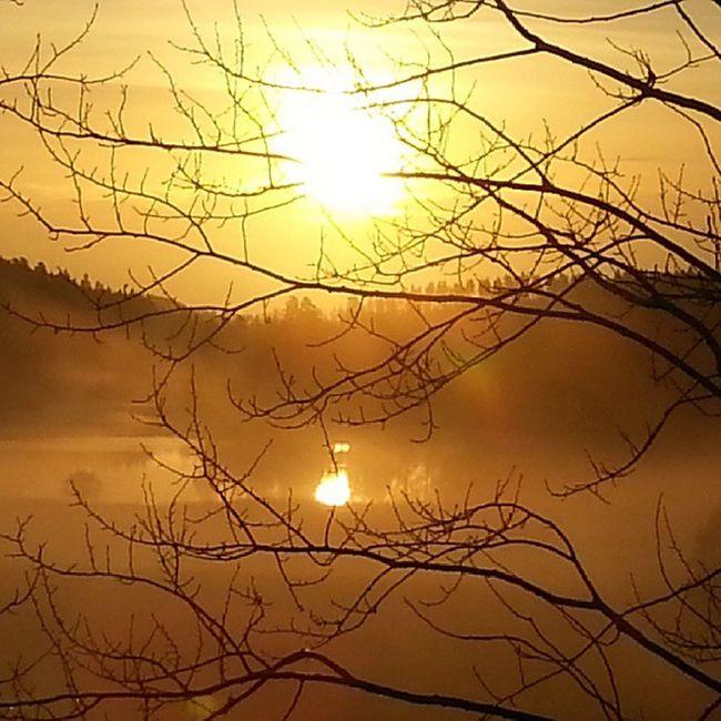 Happy Friday! Sweden Yxnerum  östergötland Sunrise morninglight earlymorning atumn atumnlight october backlight statigram sunriselovers