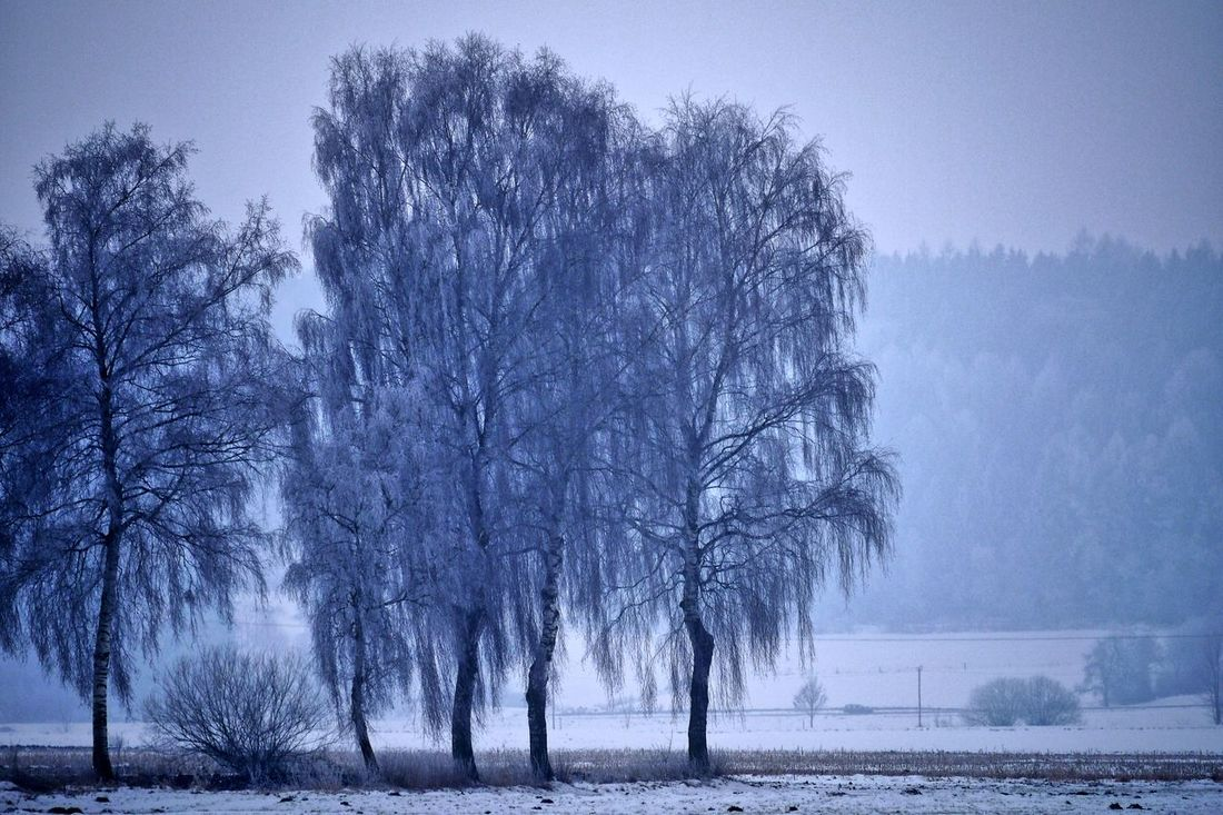 Rauhreiftag Bayern Germany Cold Temperature Frosty Nature No People Outdoors Rauhreif Rime On Tree Schwabenland Snow Tree Weiden Wintertime
