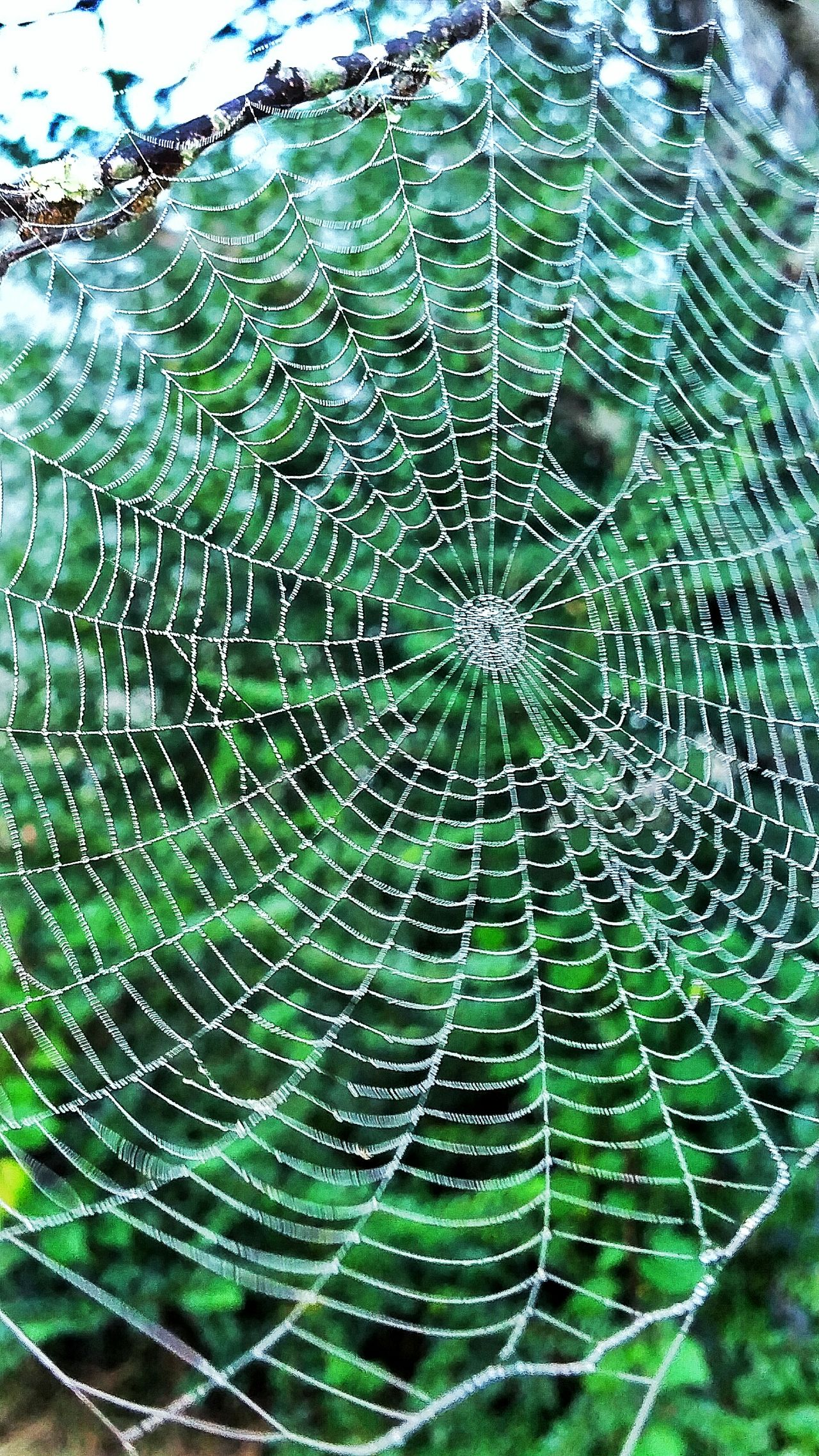 Spider Web Close-up Backgrounds Spider Full Frame Outdoors Beauty In Nature Web Fragility Nature Patterns In Nature Textured  Designs In Nature Dew Drops On Spider Web Maximum Closeness Foggy Weather Green Background Leaves Macro Insects  Dawn Wet Sunrise Textured  Beauty In Nature