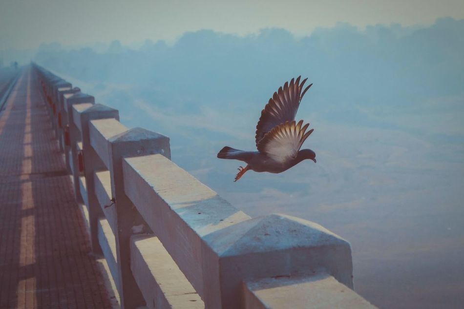 UDAAN. Flying Bird Spread Wings Mid-air Outdoors Animal Themes One Animal Day Photography Freedom Morning Strretphotographyindia India Gujarat Gandhinagar City No People Motion First Eyeem Photo Stopping Time Stopmotion Stopmotionphotography