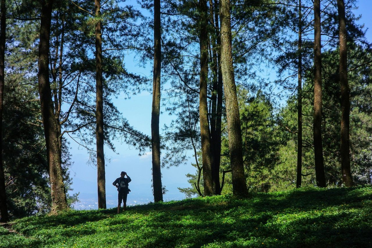 tree, nature, standing, one person, forest, leisure activity, full length, real people, grass, day, growth, adventure, men, outdoors, beauty in nature, sky, golfer, people, adult