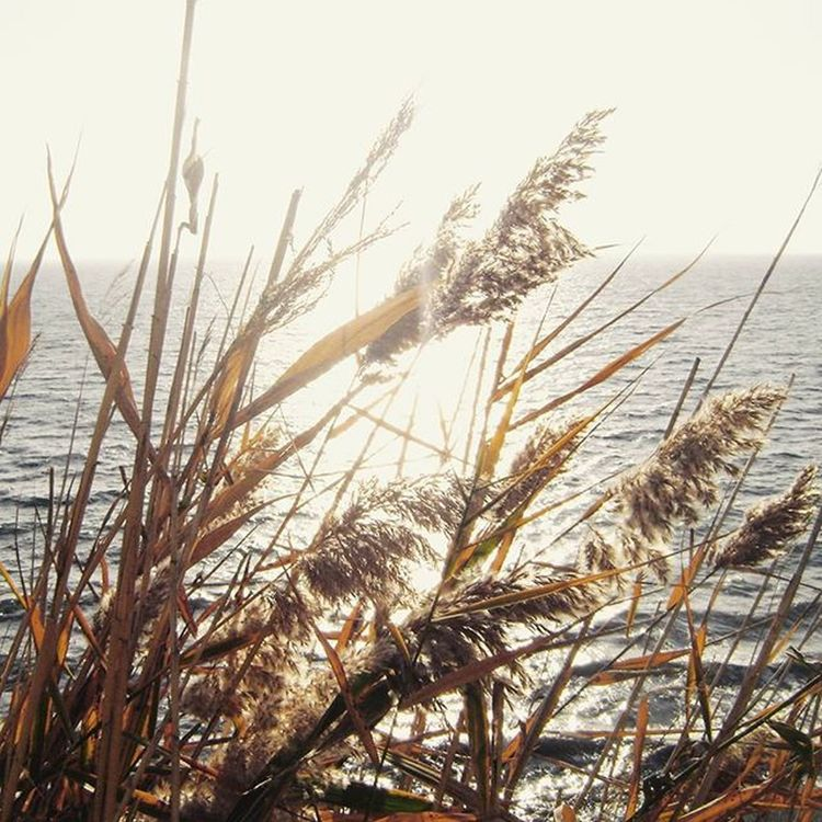 Вот и наступил настоящий бархатныйсезон 🌞 Wigandt_photo Wigandt Kzoom осень Море солнце Природа пейзаж октябрь Autumn Sea Nature Landscape Анапа новороссийск абраудюрсо Сукко тамань краснодар краснодарскийкрай Россия Russia Blacksea черноеморе камыш уморя любимоевремягода теплаяпогода бабьелето