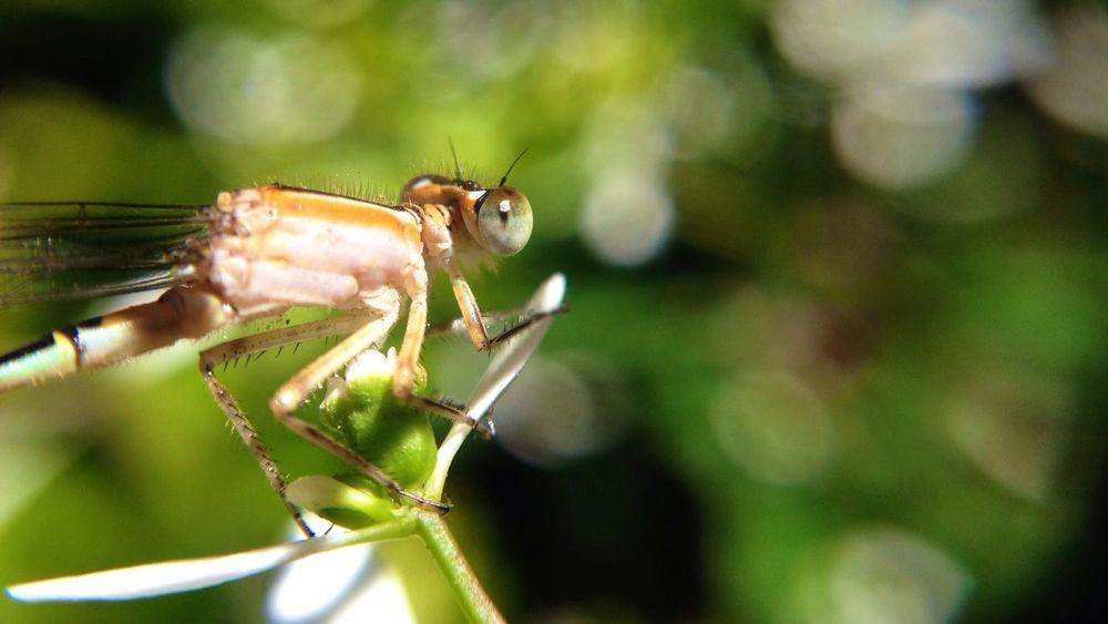 Macro Photography Macro_collection Macro IPhone #takingphoto #insect