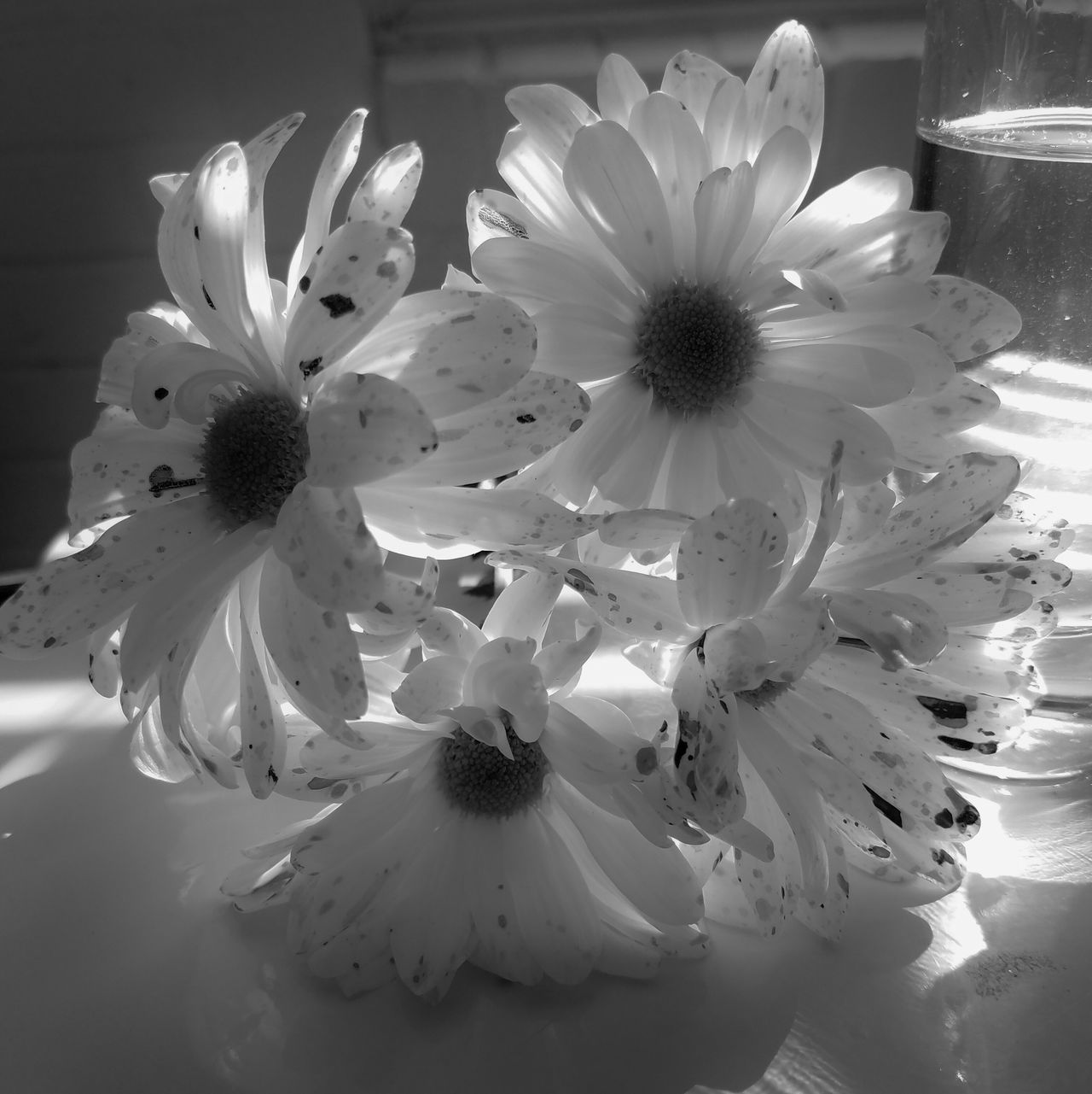 B&W Daisies Bouquet Beauty In Nature Black And White Photography Close-up Day Fine Art Photography Flower Flower Head Fragility Freshness Growth MUR B&W Nature No People Petal Plant MUR On EyeEm
