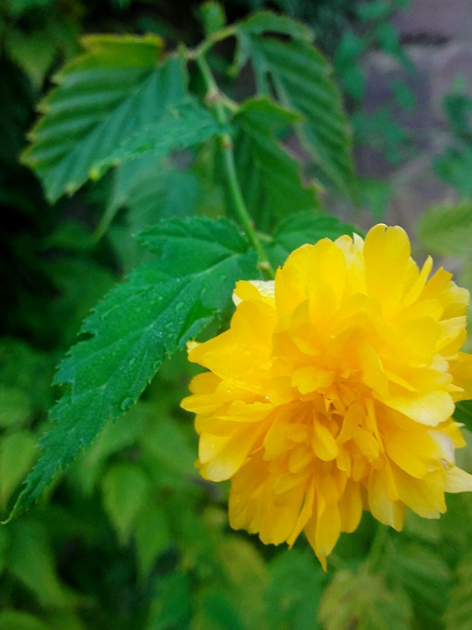 flower, yellow, fragility, petal, freshness, beauty in nature, growth, plant, flower head, nature, leaf, green color, close-up, no people, outdoors, blooming, day, springtime