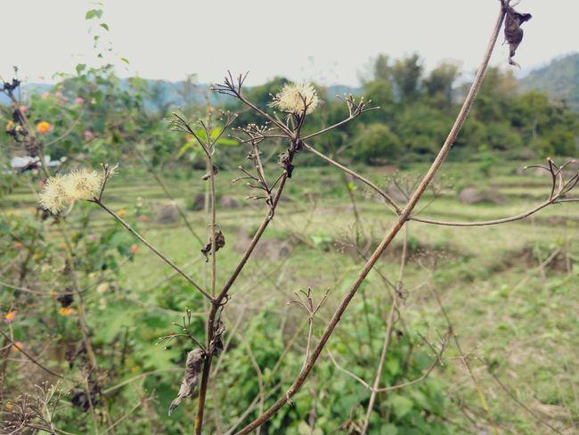Greenary Arunachal Pradesh First Eyeem Photo