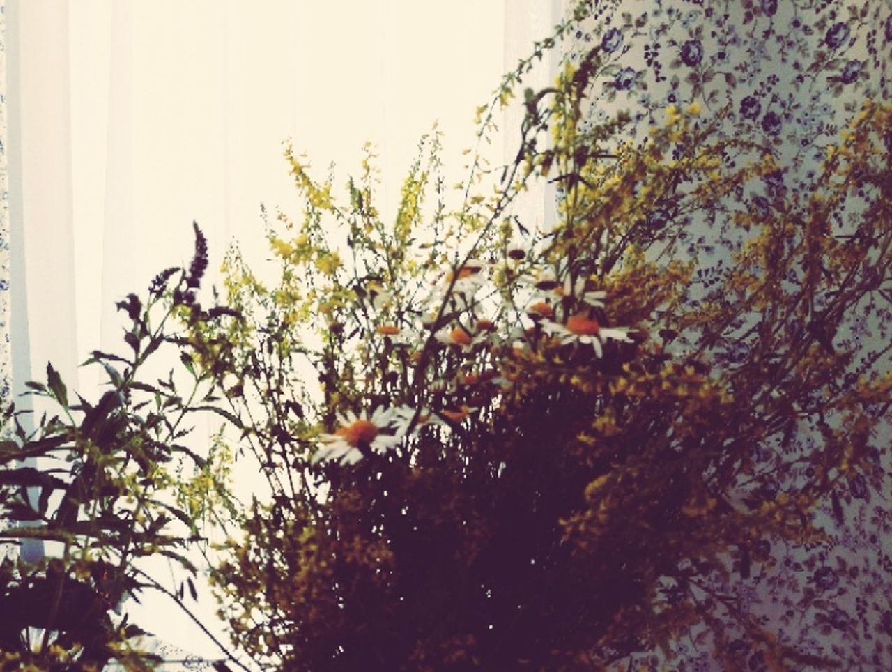 growth, tree, plant, nature, leaf, no people, clear sky, day, outdoors, branch, beauty in nature, close-up, flower, sky, freshness