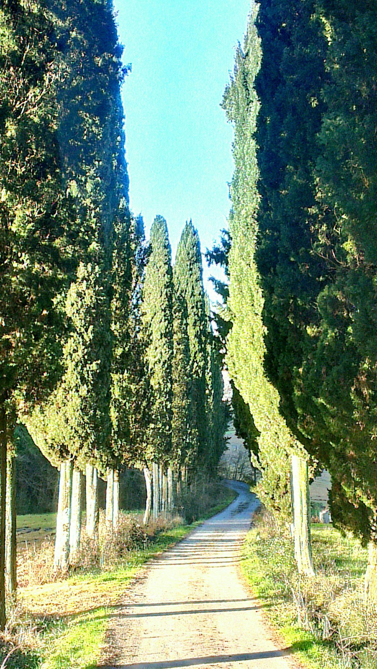 sentiero di cipressi... On The Road Born To Be Wild Trees_collection Italy Cipressi