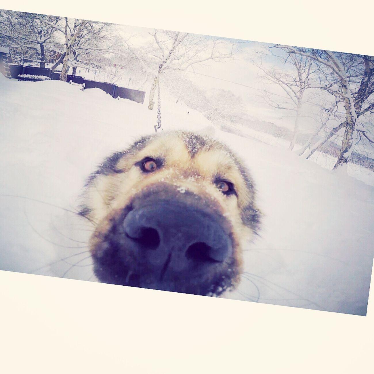 собака дизель Gopro
