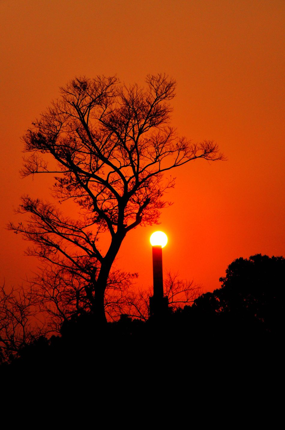 Sunset_collection Sunset✨trees✨ Colourful Nature Silhouette_collection Lamps Beautiful Nature