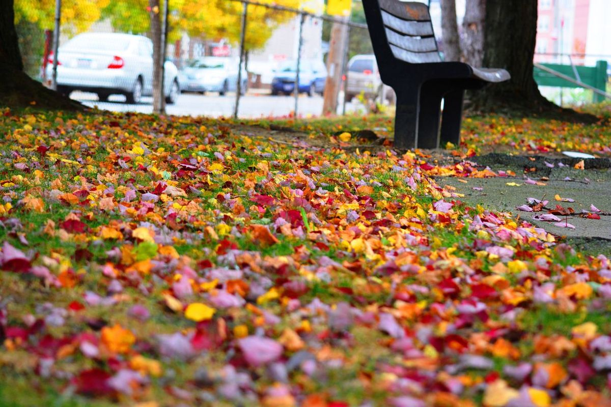 Colorful Autumn Colour Of Life Leaves Bench Boston My Favorite Place TakeoverContrast The Great Outdoors - 2017 EyeEm Awards