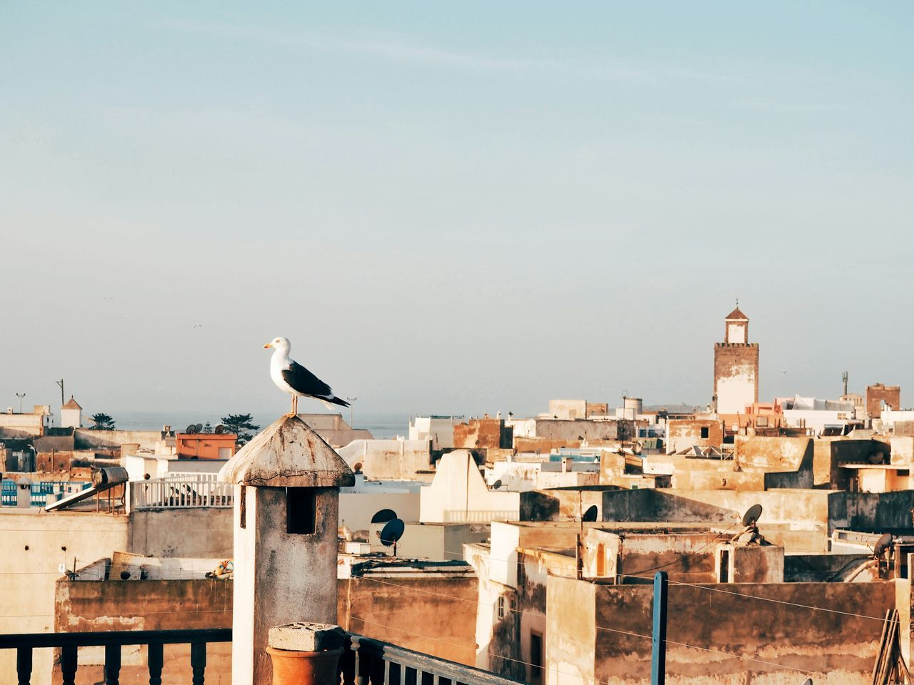 Bird Animals In The Wild Perching Architecture Animal Themes Animal Wildlife One Animal Built Structure Sky No People Roof City Outdoors Building Exterior Day Nature Building Terrace Seagull Coastal Coastal Town Essaouira Essaouira Bay Cityscape Old Town