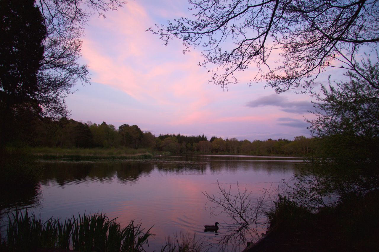 Sunset at Stover Country Park. Reflection Tree Sky Nature Beauty In Nature Lake Tranquil Scene Water Sunset Scenics Tranquility Cloud - Sky No People Silhouette Outdoors Day Sunset Silhouettes Sunset_collection Devon EyeEmNewHere