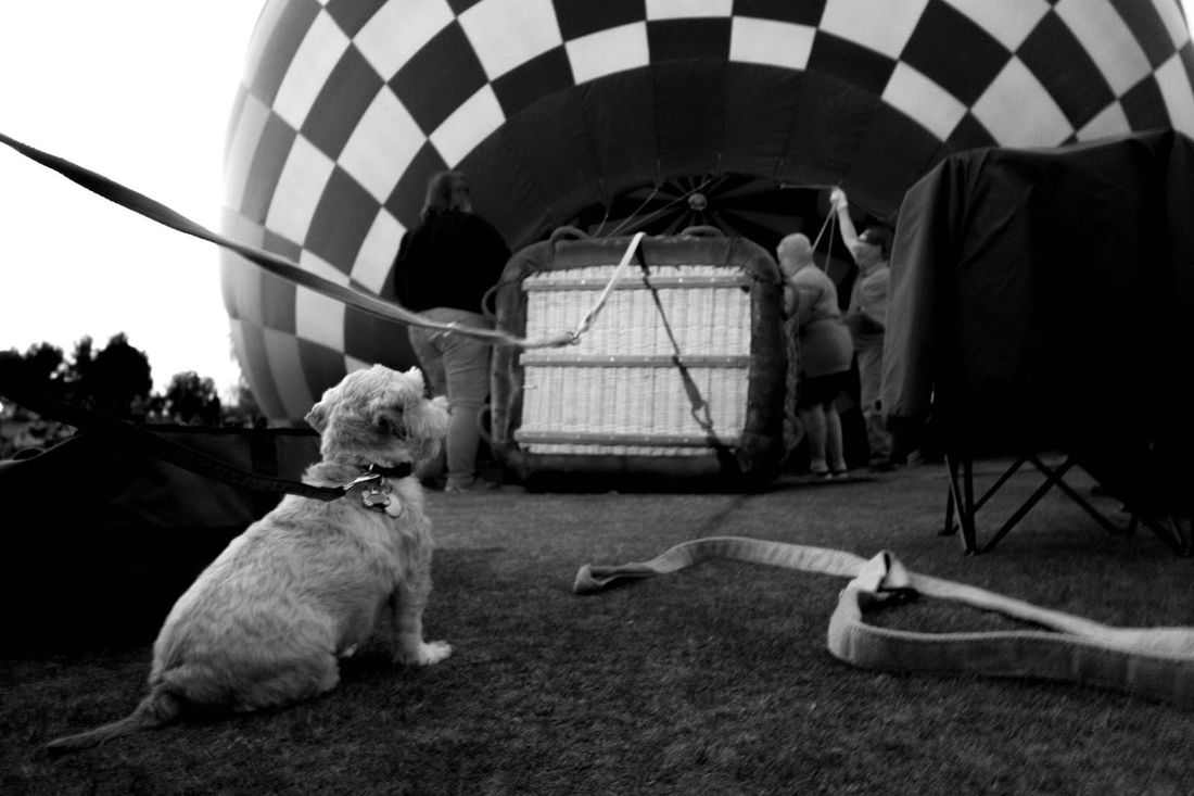 Dog's eye view. Insideview Upcloseandpersonal Tucson Az Liftoff Preparation  Capture The Moment Living And Learning Winterfest Outdoor Photography Thephotographer Upupandaway Adventures Eye4photography  Arizona Tubac Photography Myperspective Artistsmind Nightphotography Toto Showcase: November Bottomview Bucketlist B&w Street Photography Fine Art Photography