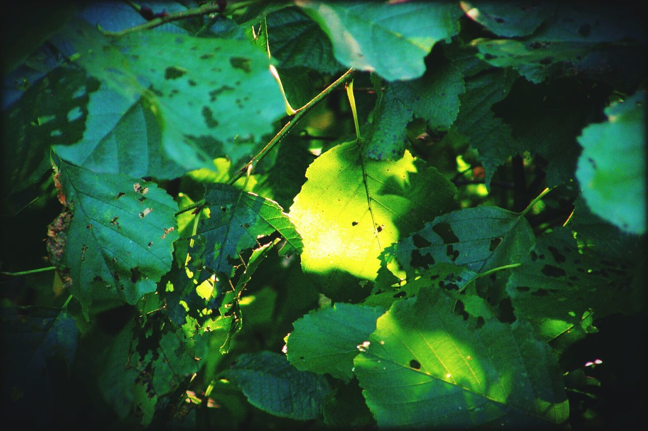 leaf, green color, growth, nature, outdoors, fruit, no people, food and drink, day, plant, beauty in nature, close-up, yellow, freshness, food