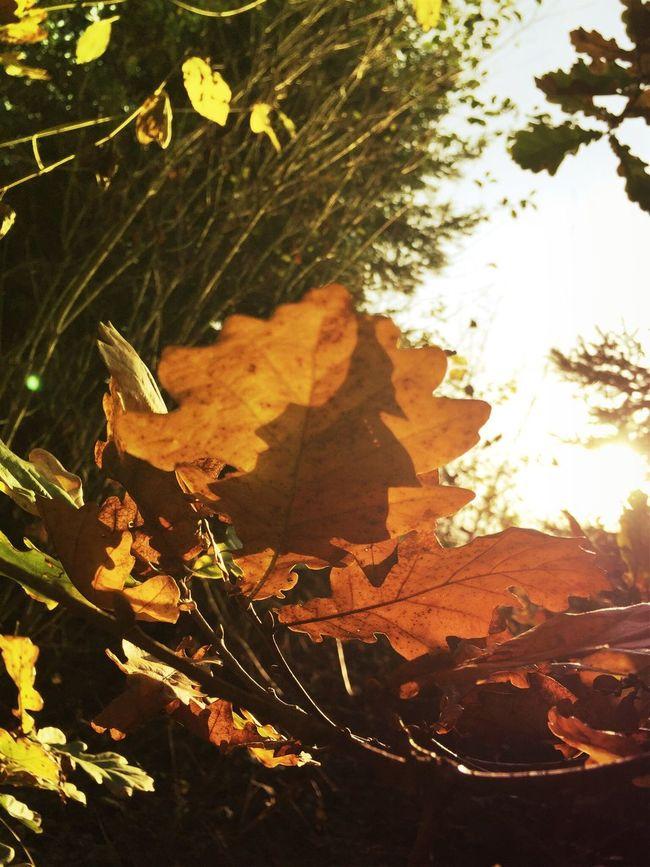 Leaves Forest Walking Around Enjoying Life