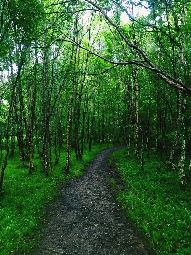 Scotland Woodlands Trail Woodlands Walk Loch Tay