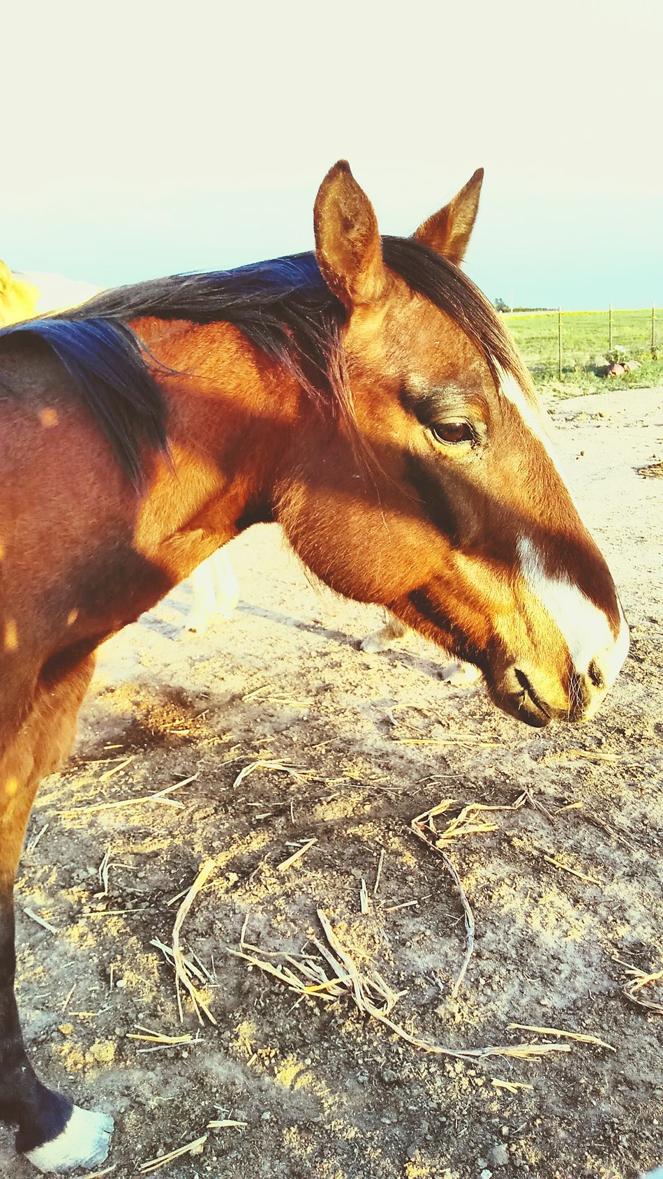Ranch horses One Animal Horse Animal Themes Mammal Day Outdoors No People Close-up Nature Rural_living Hoof Corral Stable Pasture Barn Equine Animal Theme Cowboy Lifestyle Country Farm Ranch Livestock Working Animal Pony