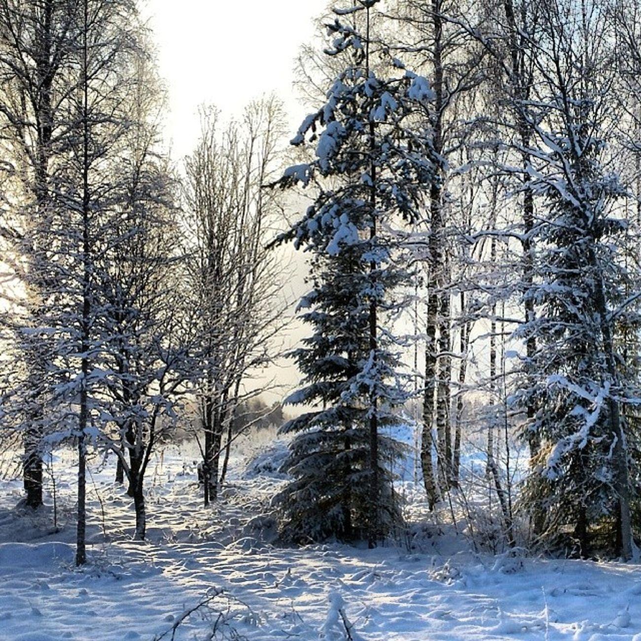 Instadalarna Vinter Dalarna Träd Hjortnäs
