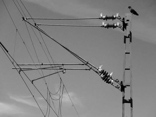 Power Lines by Gaby