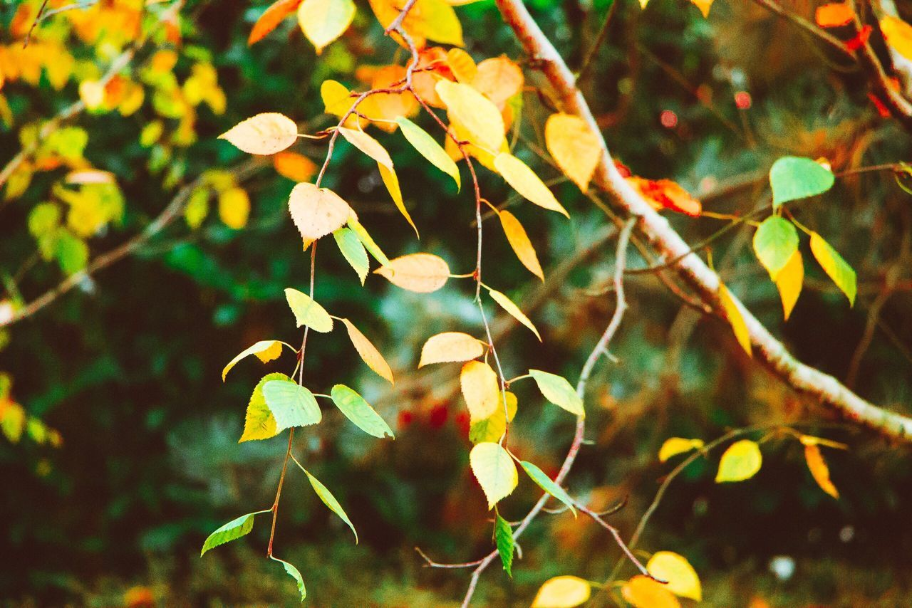 Beauty in fall Nature Flower Growth No People Outdoors Close-up Canon70d Canon_photos Canon 70d Canonphotography Fall Beauty Fall,