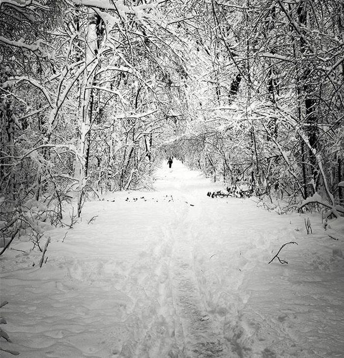 Winter Sofia Borisovagradina Snow Snowy Woods