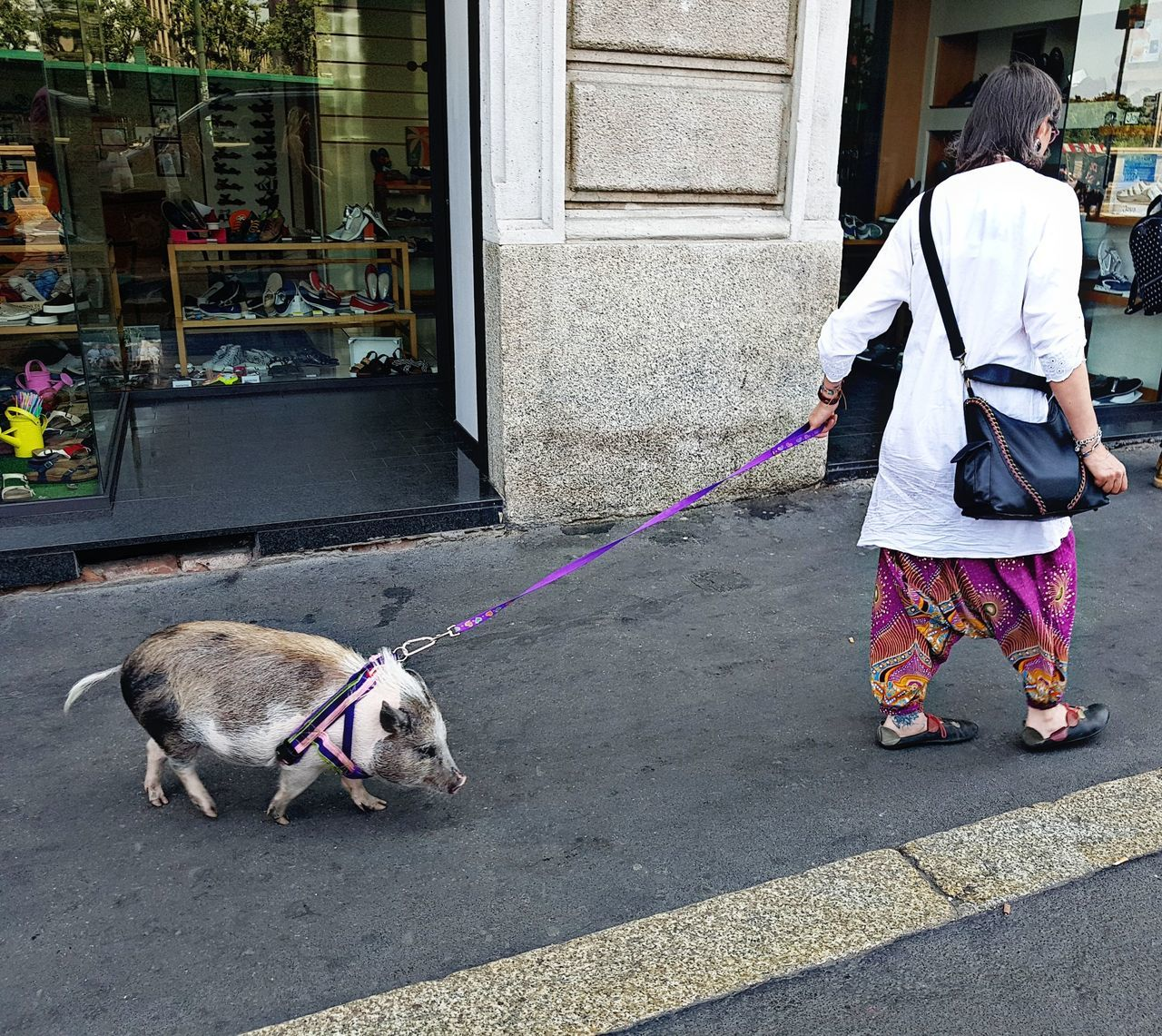 Oddities From The World Pork Crazy Moments Animal Themes Domestic Animals Ontheroad People Real People Strangethings Bizzare PeppaPigWorld 😂 Peppa In Town Peppapig The Street Photographer - 2017 EyeEm Awards
