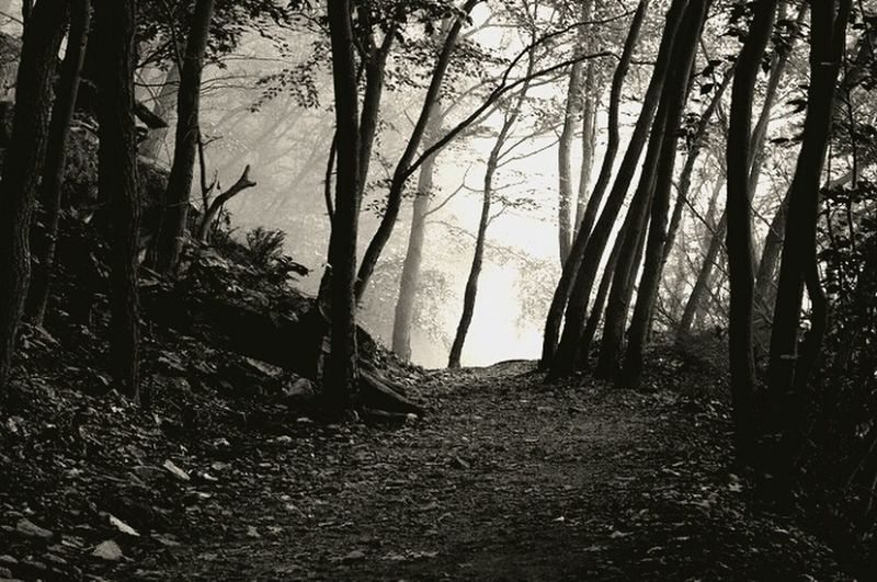 Atop 1000 Steps. 1000steps Jack's Mountain Hiking Trees Fog Mist Morning Black And White
