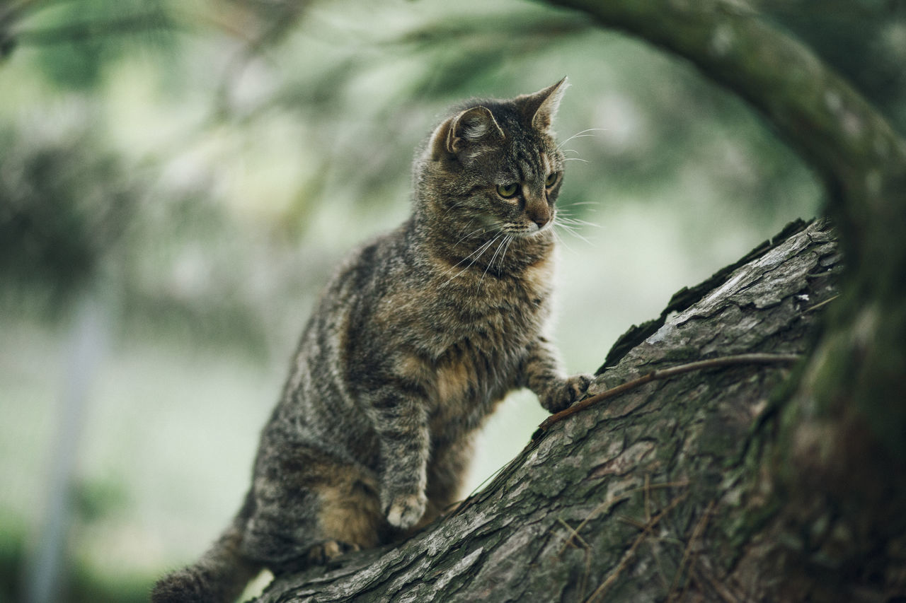 Lazy Sunday in Mielec, Poland. Animal Themes Close-up Day Domestic Animals Domestic Cat Feline Focus On Foreground Mammal Nature No People One Animal Outdoors Pets Sitting Tree