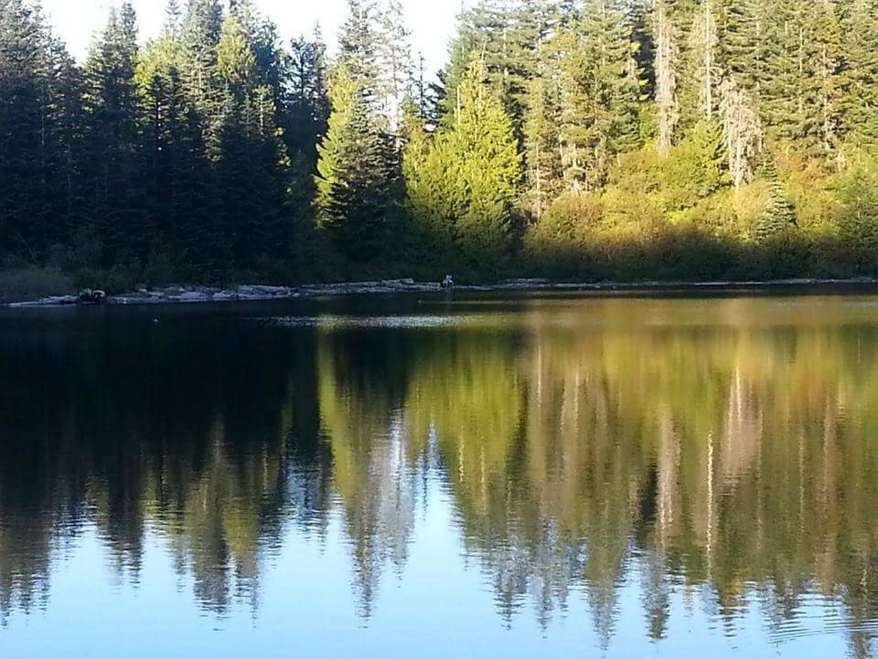 Reflection Tree Water No People Nature Refraction Day Beauty In Nature Scenics Sky Outdoors Tranquil Scene HIKES OUTDOOR Mt Hood Oregon Trails Mirror Lake Natural Parkland Tranquility Beauty In Nature Forest Growth Lake Tree Nature Sunset