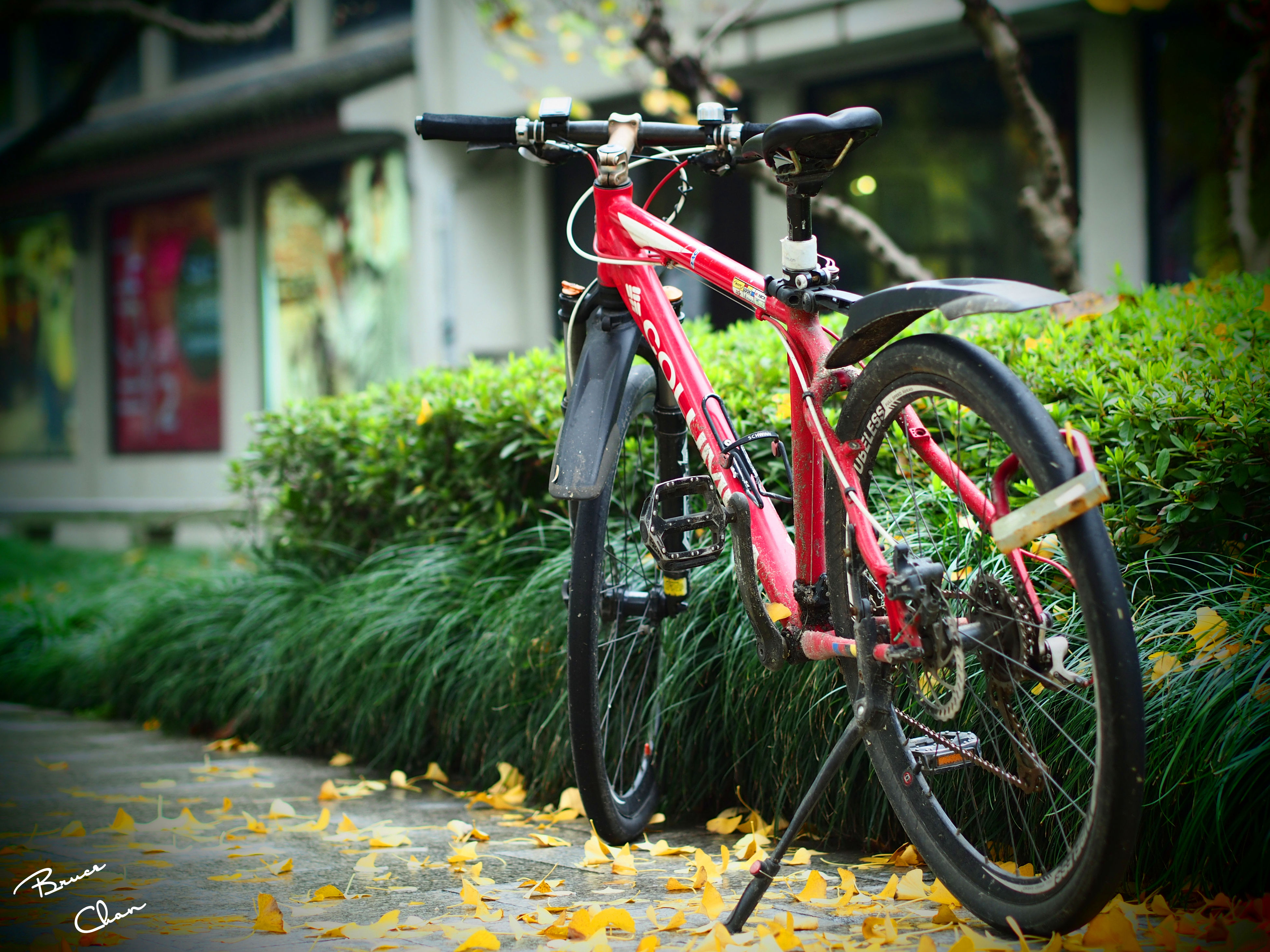 bicycle, mode of transport, transportation, land vehicle, stationary, parking, parked, wheel, focus on foreground, red, plant, outdoors, day, street, tree, travel, no people, motorcycle, selective focus, leaning
