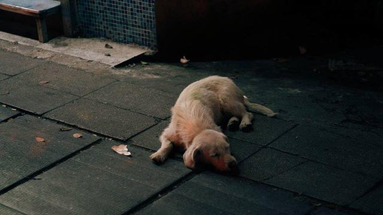 많이 졸리니 강아지 VSCO 감성사진 새벽감성 내가찍음 스냅사진 스냅 Snap Photography Photo On_photo . . . 중국 우한 中国 武汉 소니 넥스6 Sony Nex6 미놀타 Minolta 美能达 minolta md 50mm f1.7