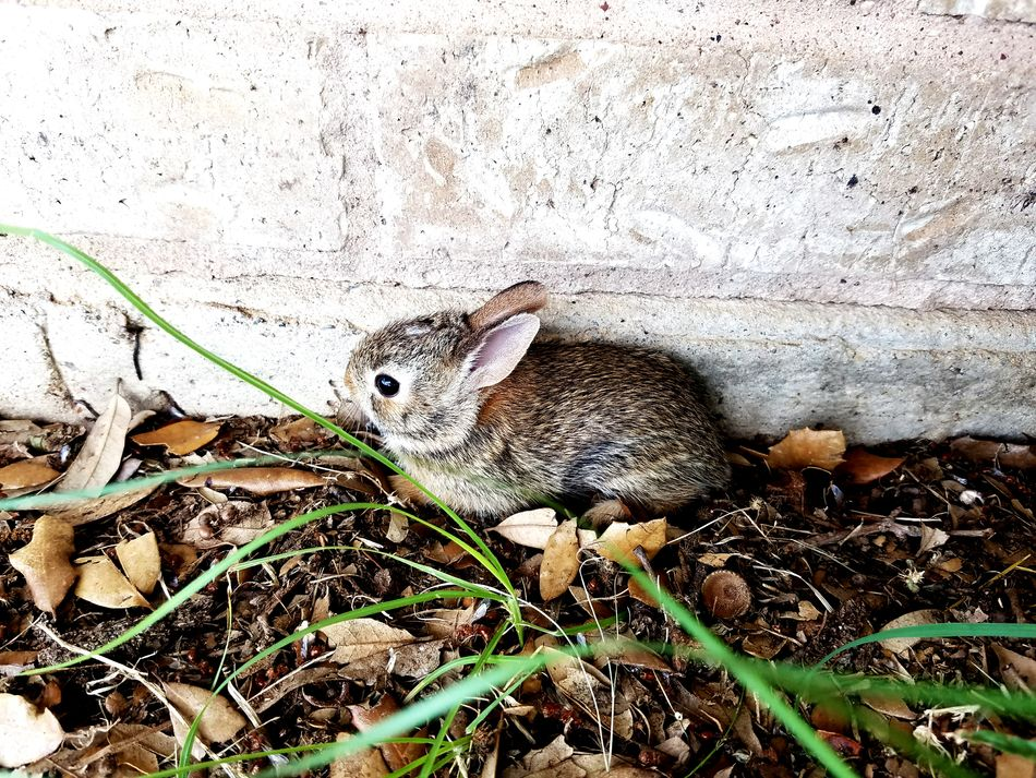 Bunny  Cottontail Baby Scared