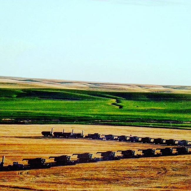 Attheranch Fleishauer MyDad Combines Harvest Magnificent Wheat Wheatfields Southdakota Taramae