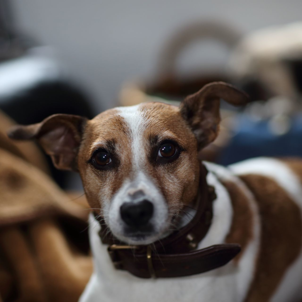 Beautiful stock photos of dogs, Animal, Animal Face, Animal Themes, Close-Up