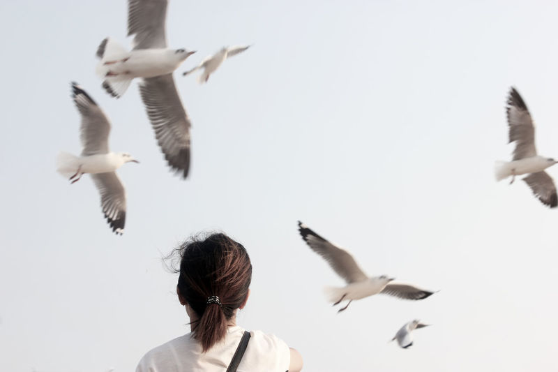 Woman Facing The Evacuate Seagulls's Flock Flying. Animal Themes Avian Avian Collection Backgrounds Backside Portrait Beautiful Bird Birds Birds Collection Birds_collection Evacuate Face Feather  Feature Feeding The Birds First Eyeem Photo Flying Poultry S Seagulls Seagulls Flying Seagulls Flying Over Me Sky Wildlife Woman
